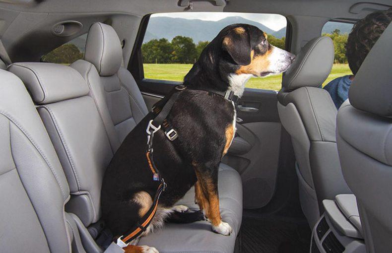 Voyager en voiture avec votre animal de compagnie
