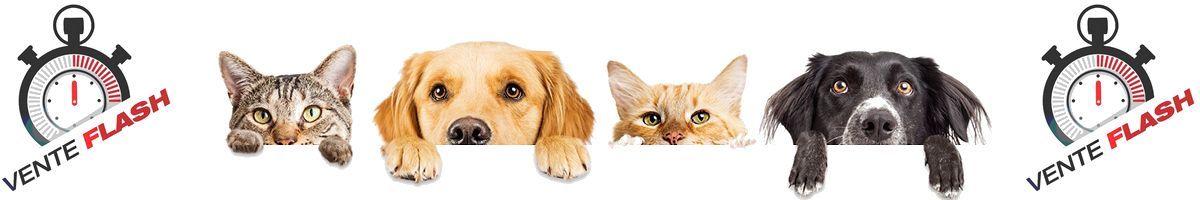 vente flash chien chat