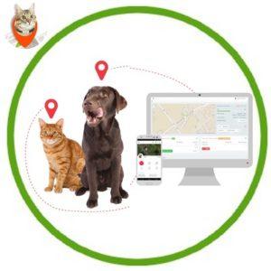 Traceurs et Balises GPS Pour Chats