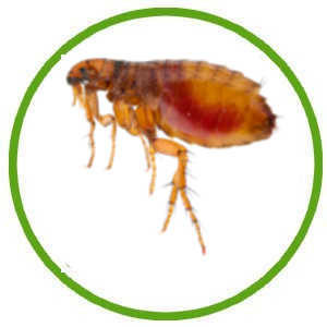 Anti Parasites & Insectes