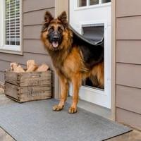 Porte en aluminium pour animaux pour les conditions extrême de PetSaf chien
